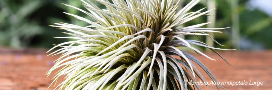 Air Plant Greenhouse Buy Air Plants Online Air Plant Greenhouse